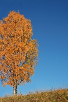Solitary Tree During Fall Royalty Free Stock Photos