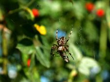 Free Spider Lunch - Prey Stock Photo - 3273680
