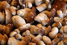 Free Mushrooms Royalty Free Stock Photography - 3273687