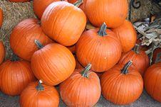 Free Pumpkins Stock Photo - 3274000