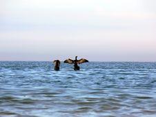 Free Birds Royalty Free Stock Photography - 3276187