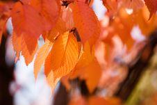 Free Colourful Autumn Stock Photos - 3276243