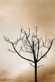 Free Lonely Tree Stock Image - 3277041