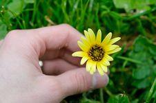 Free Flower Picking Stock Photo - 3277360