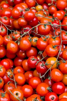 Free Tomatoes Royalty Free Stock Photo - 32704775