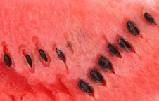 Free Slice Of Watermelon. Close Up. Whole Background. Stock Image - 32716541