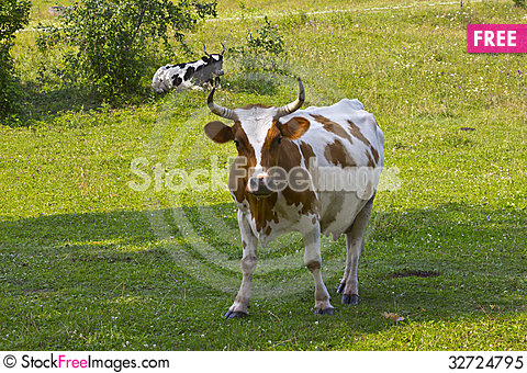 Free Cattle On Pasture Royalty Free Stock Photo - 32724795