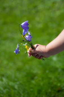 Free Child Hand With Flowers Royalty Free Stock Image - 32725926
