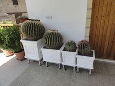 Free Large Cactus Stock Images - 32736874