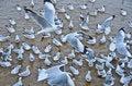 Free Seagull Stock Photos - 32743083