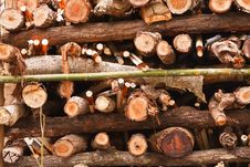 Free Stack Of Firewood. Stock Images - 32740874