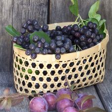 Free Black Chokeberries And Plums Royalty Free Stock Photo - 32742365