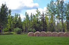 Bales Of Hay In Meadow Royalty Free Stock Image