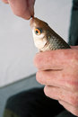 Free Fish On A Hook On The Winter Ice Fishing Stock Photos - 32770253
