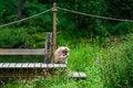 Free Sitting Monkey Stock Photography - 32788302