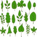 Free Set Of Vector Leaves Stock Photos - 32791073