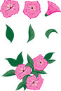 Free Petunia Pink Stock Photo - 32793600
