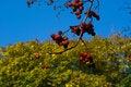 Free Last Autumn Leaves Royalty Free Stock Photo - 3284465