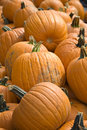 Free Pumpkins For Sale Stock Photo - 3289430