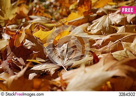 Free Autumn Stock Photography - 3284502