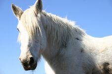 Free Large Horse Royalty Free Stock Images - 3280259