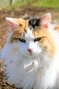 Free Feline Stock Images - 3280344