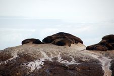 Free Seals Sleeping On Rocks Stock Images - 3281114