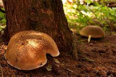 Free Unusual Mushroom Royalty Free Stock Photography - 3281737