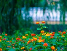 Free Lonesome And Quiet Flower Stock Photos - 3283353