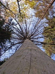 Free Dead Tree Stock Photography - 3283732