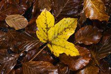 Free Yellow Leaf Stock Photos - 3283843