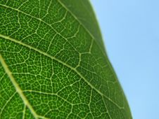Free Macro Leaf Abstract Royalty Free Stock Photography - 3284167