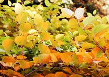 Free Leaves Changing Color Royalty Free Stock Images - 3284359