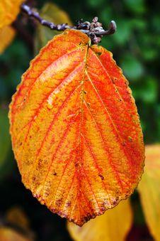 Free Single Leaf Stock Photos - 3284473