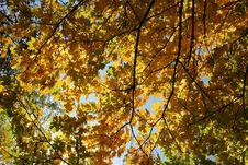 Free Autumn Royalty Free Stock Photos - 3284598