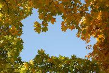 Free Autumn Royalty Free Stock Photos - 3284608