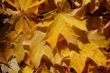 Free Autumn Stock Photos - 3284613