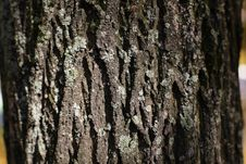 Free Bark Royalty Free Stock Photography - 3284617