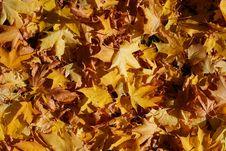 Free Autumn Stock Photo - 3284620