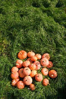 Free Harvest Stock Photo - 3284700