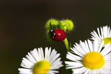 Lady-beetle Stock Photos