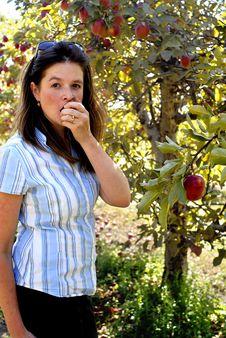 Free Fresh Apples Royalty Free Stock Photo - 3285905