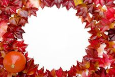 Free Fall Leaves Stock Images - 3286714