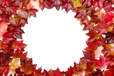 Free Fall Leaves Royalty Free Stock Image - 3286716