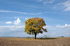 Free Lonely Tree Royalty Free Stock Photo - 3286755