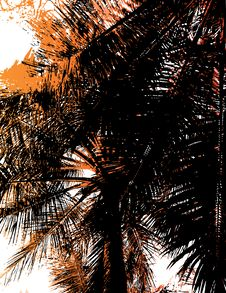 Free Silhouette Of A Palm Tree. Stock Photo - 3287100