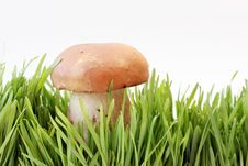 Free Mushrooms Royalty Free Stock Photo - 3287255