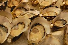 Free Oyster Close Up Stock Photo - 3287820