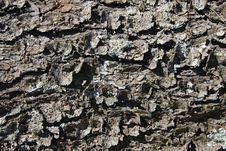 Free Pine Bark Royalty Free Stock Image - 3287956