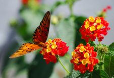Free Butterfly At Lunch Stock Photography - 3288032